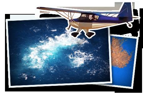 spoter-plane copy