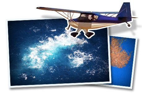 fish spotting planes